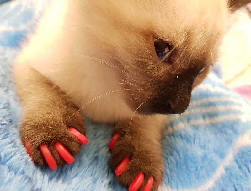 11. животные, кошачий маникюр, маникюр, одинаковый маникюр, собачий маникюр, флешмоб, фото