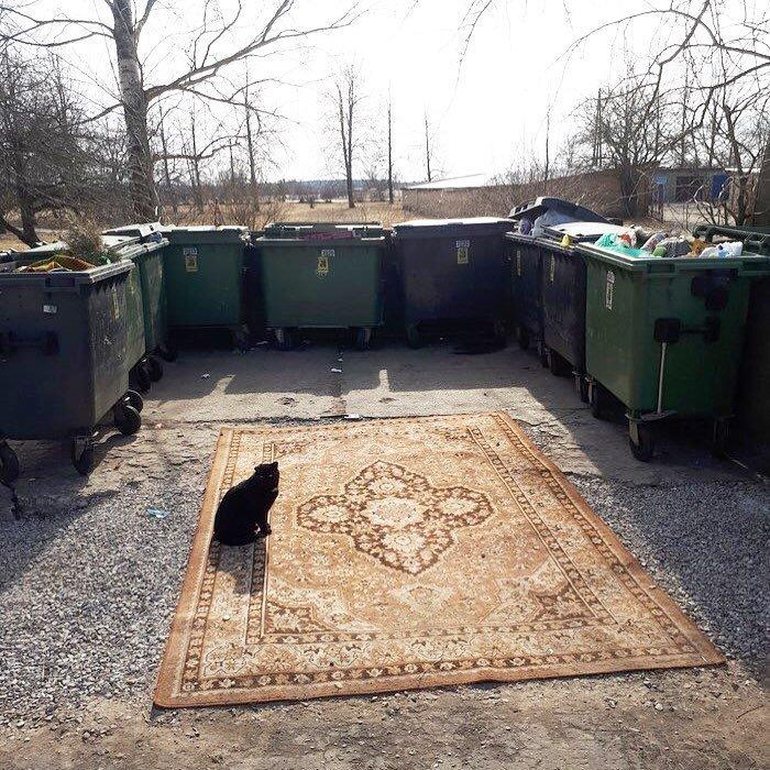 17. Барская свалка мусорка, помойка, помойное ведро, россия, свалка, фото