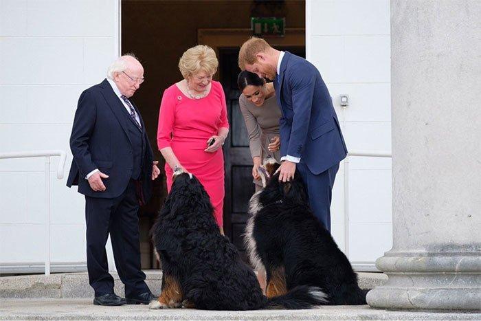 6. Знакомство принца Гарри и Меган Маркл с собаками президента во время их первого официального визита в Ирландию в мире, интересные люди, ирландия, народная любовь, политика, политики, президент, фото