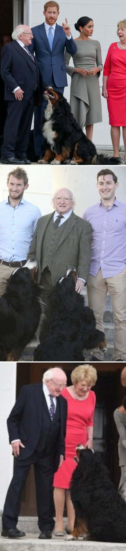 """5. """"Найдите в своей жизни того, кто будет смотреть на вас также, как собаки мистера Хиггинса смотрят на него"""" в мире, интересные люди, ирландия, народная любовь, политика, политики, президент, фото"""