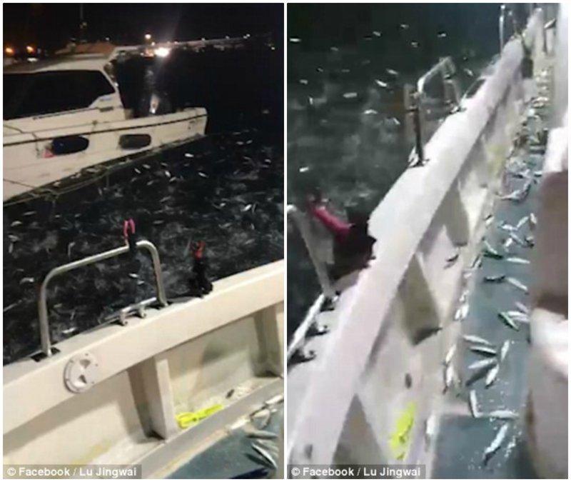 День удался! Тысячи сардин выпрыгнули из воды и попали к рыбаку в лодку видео, животные, море, неожиданно, рыбак, рыбалка, рыбы, сардины