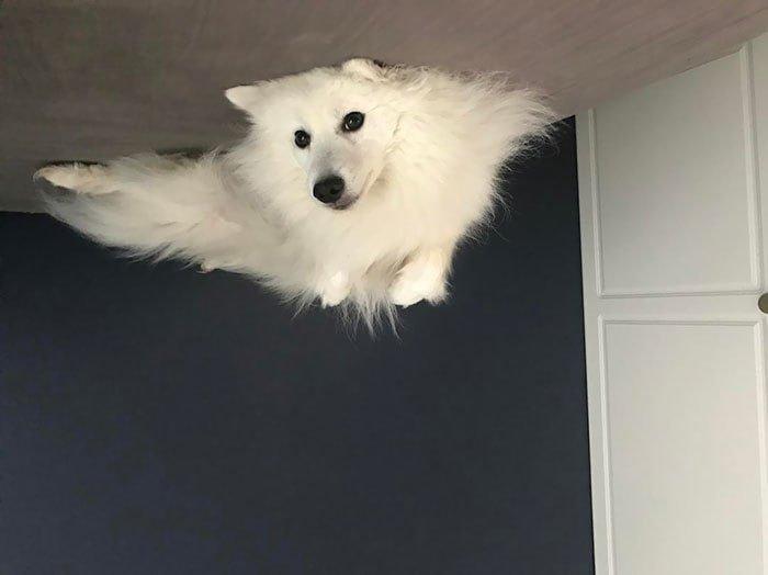 В интернете заметили, что переворачивать фотки собак, лежащих на полу — крутая идея. И тут понеслось перевернули, пол, потолок, прикол, собака, умора, юмор