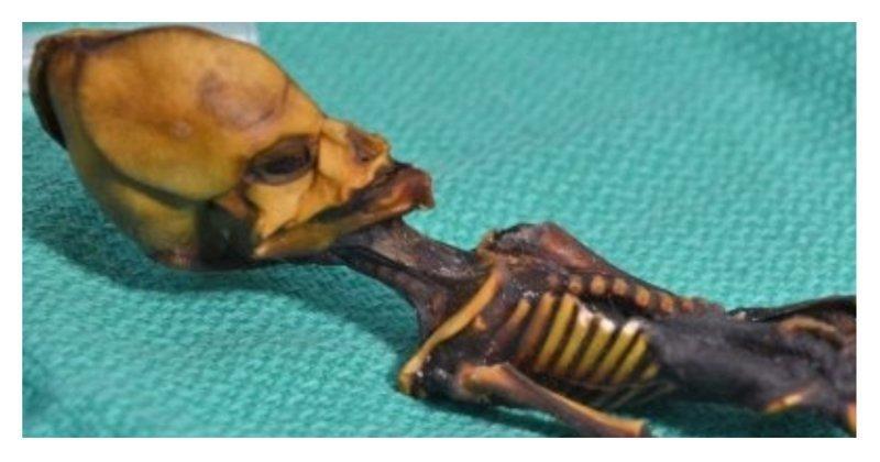 Ученые определили, кем был инопланетянин, найденный в пустыне Атакама International Journal of Paleopathology, ynews, загадка цивилизации, находка, останки, палеонтология, уфо