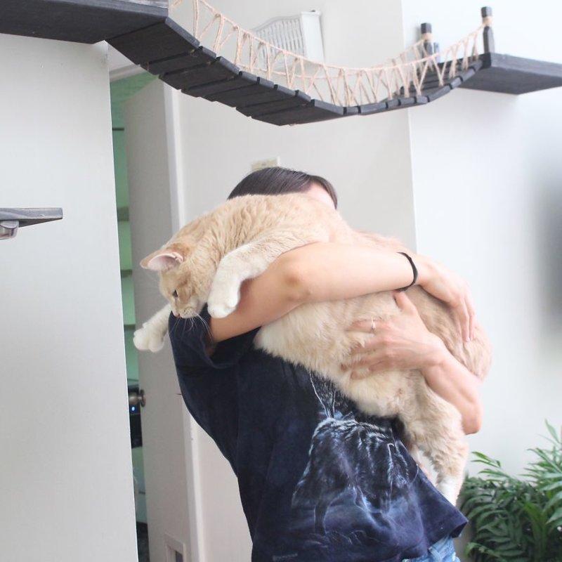 Игры так и остались, но теперь хозяева еще и намерено переставляют миску с едой, чтобы кот лишний раз прогулялся по комнате Catastrophicreations, Бронсон, диета, животные, история, кот, похудение, фото