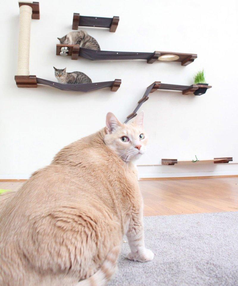 Пока он не готов тестировать мебель своих хозяев Catastrophicreations, Бронсон, диета, животные, история, кот, похудение, фото