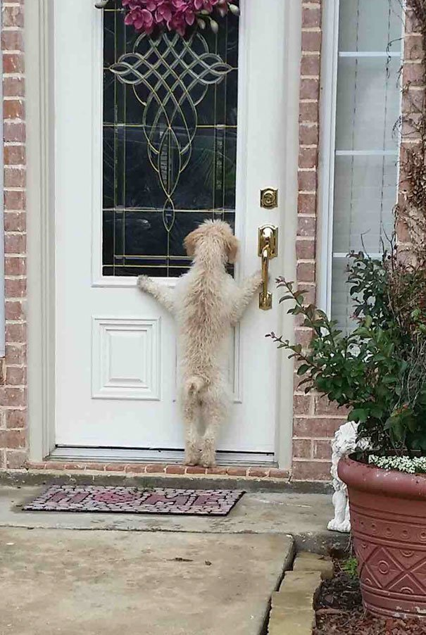 Убежала из дома, но быстро передумала глупость, животные, неудача, подборка, ситуация, смех, собака