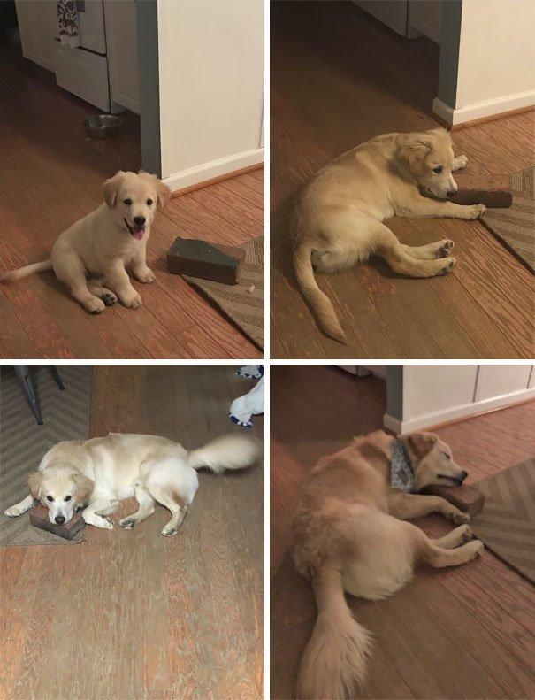 Кирпич - лучшая игрушка глупость, животные, неудача, подборка, ситуация, смех, собака