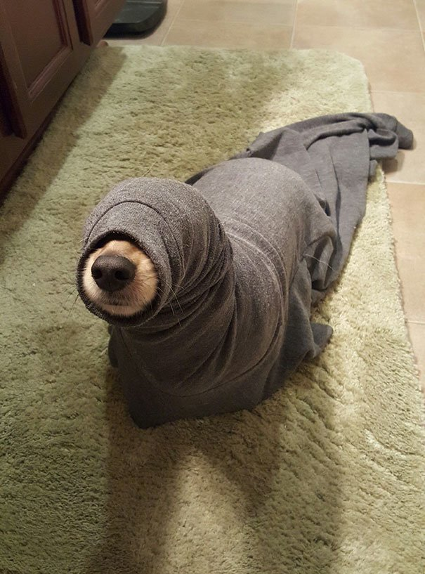 Как вам такой тюлень? глупость, животные, неудача, подборка, ситуация, смех, собака