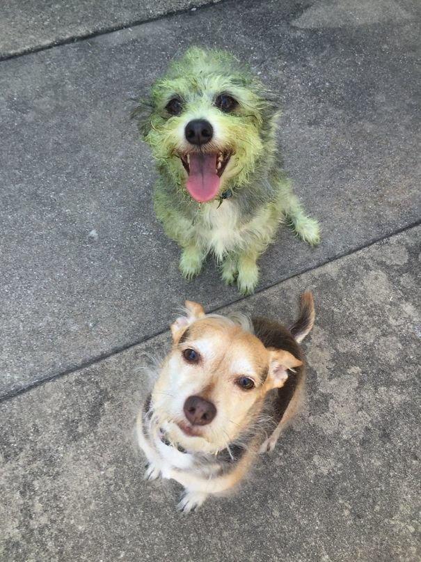 Сразу видно, кто помогал косить траву глупость, животные, неудача, подборка, ситуация, смех, собака