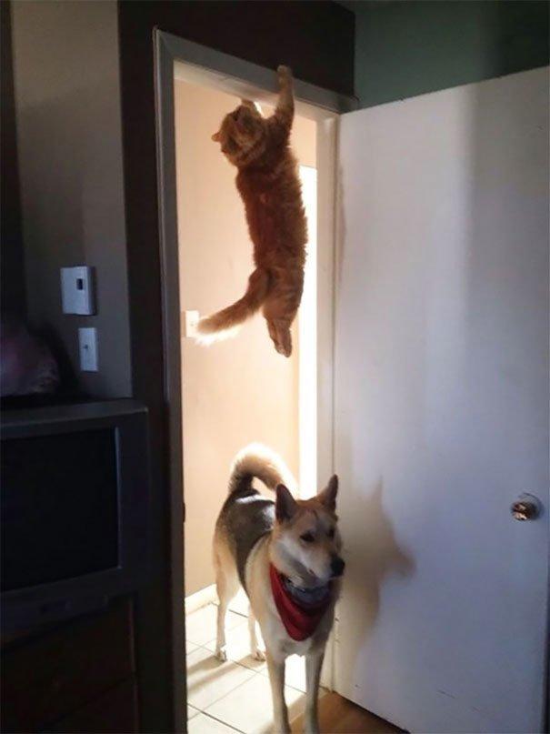 А где кот? глупость, животные, неудача, подборка, ситуация, смех, собака
