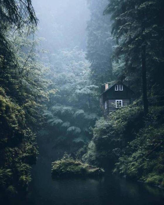 Дом в лесу день, животные, кадр, люди, мир, снимок, фото, фотоподборка