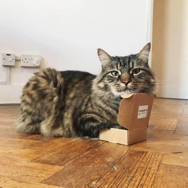 Коробки - настоящая слабость котиков день, животные, кадр, люди, мир, снимок, фото, фотоподборка