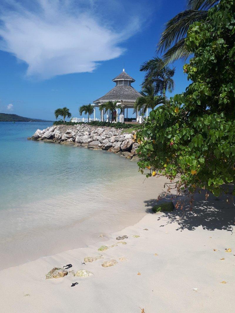 Ямайка день, животные, кадр, люди, мир, снимок, фото, фотоподборка