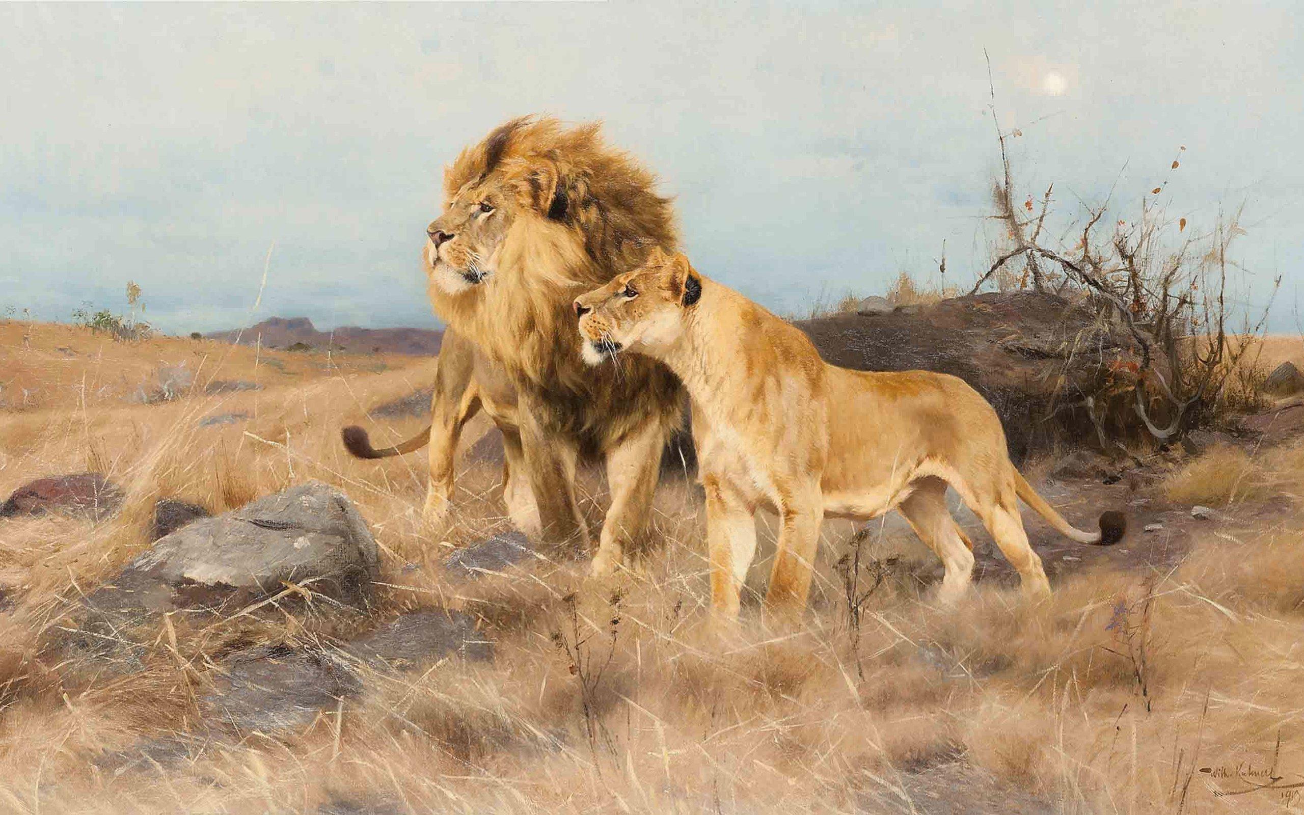 Обои Хищник, позитив, тема, малыш. Животные foto 16