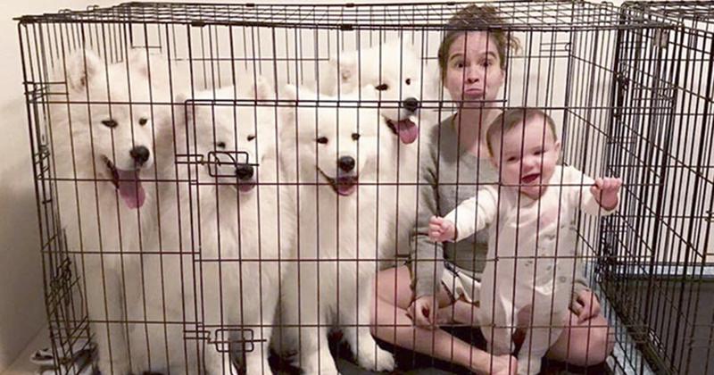 Двое маленьких детей и четверо самоедов в одном доме Порода, грумер, животные, ребенок, самоедская собака, семья, фотография