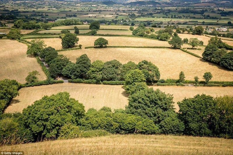 Высохшие поля, Гластонбери, графство Сомерсет англия, аномальная жара, аэрофотосъемка, великобритания, засуха, лондон, раньше и сейчас, сравнение