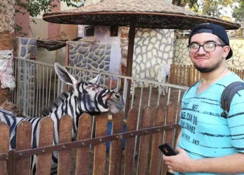 Египетский зоопарк решил обмануть посетителей, выдав ослов за зебр в мире, животные, зебра, зоопарк, обман, осел