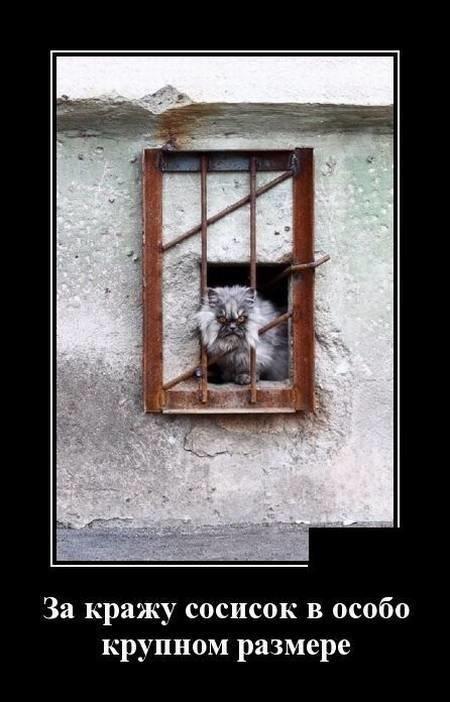 Кошачьи демотиваторы демотиваторы, животные, коты