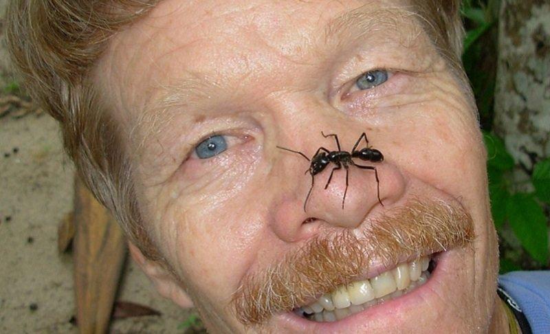 Энтомолог испытал на себе самые болезненные укусы насекомых и составил шкалу боли боль, в мире, люди, насекомые, укус, энтомолог