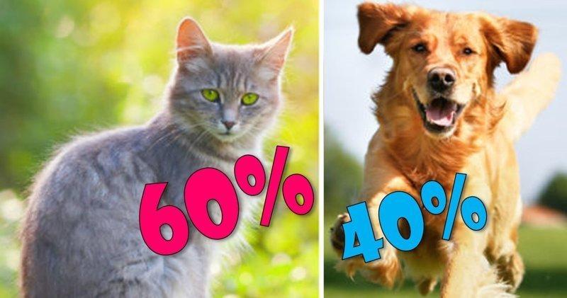 Кот или собака? Кого лучше завести гуманизм, кошки, ответственность, собаки