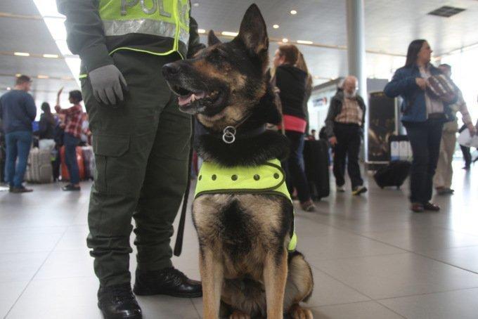 Колумбийские мафиози готовы заплатить 70 тысяч долларов за голову пса Colombia, ynews, Сомбра, наркомафия, поиск наркотиков, полиция, собака