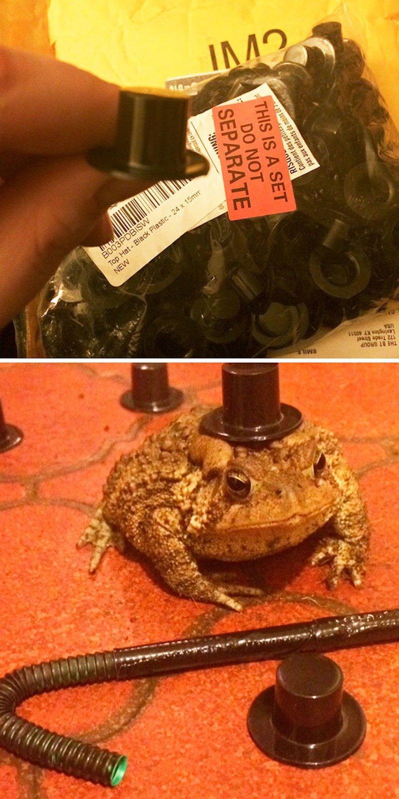 7. Будучи нетрезвой купила для домашней жабы сто мини-цилиндров. Что-то подсказывает, что земноводное это совершенно не оценило. алкоголь в крови, приключения, смех, спиртное, стыдно, юмор