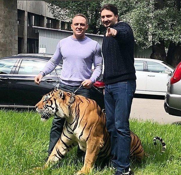 В московском цирке тигр подрался со львом на глазах у публики ynews, видео, драка хищников, новости, происшествие в цирке, тигр против льва, цирк, шоу Запашных