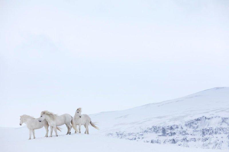 Может быть, кто-то, посмотрев на эту красоту, и сам захочет поехать в Исландию дикая природа, исландия, исландия фото, исландия это страна неземной красоты, красота, лошади, лошадь, скандинавская мифология