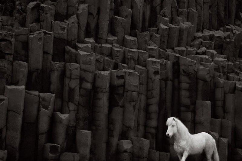 Сказка наяву: дикие лошади Исландии дикая природа, исландия, исландия фото, исландия это страна неземной красоты, красота, лошади, лошадь, скандинавская мифология