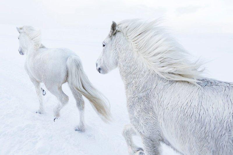 Согласно легенде, у Слейпнира было восемь ног, а ездил на нем сам бог Один дикая природа, исландия, исландия фото, исландия это страна неземной красоты, красота, лошади, лошадь, скандинавская мифология