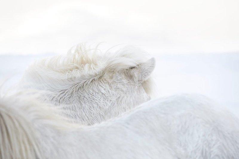 Но, по его собственному признанию, для этих работ просто необходим был цвет дикая природа, исландия, исландия фото, исландия это страна неземной красоты, красота, лошади, лошадь, скандинавская мифология