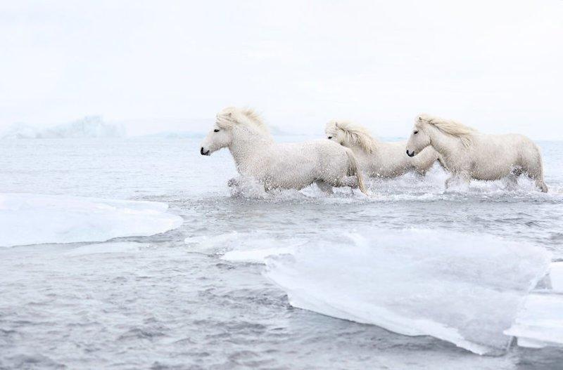 Вдохновением для фотографа послужил древнескандинавский миф о волшебном коне Слейпнире дикая природа, исландия, исландия фото, исландия это страна неземной красоты, красота, лошади, лошадь, скандинавская мифология