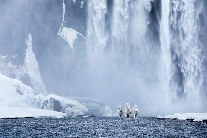 Получилось потрясающе дикая природа, исландия, исландия фото, исландия это страна неземной красоты, красота, лошади, лошадь, скандинавская мифология