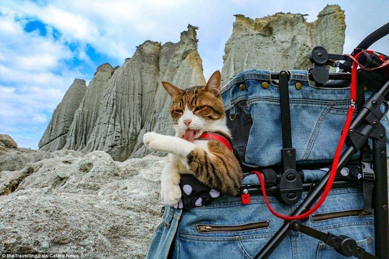 Специально для животных была оборудована модная тележка, ранее служившая детской коляской домашние животные, животные, инстаграмм, котовасия, кошка, кошки, путешествие, япония