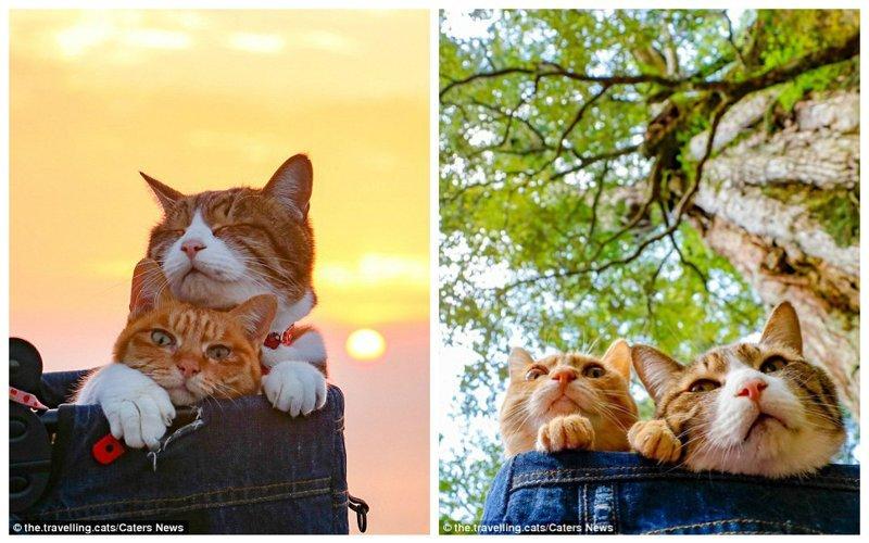 Забавный факт: Дайсуке Нагасава назначил Дайкичи генеральным менеджером, а Фуку-чана - секретарем компании, основателем которой он является домашние животные, животные, инстаграмм, котовасия, кошка, кошки, путешествие, япония
