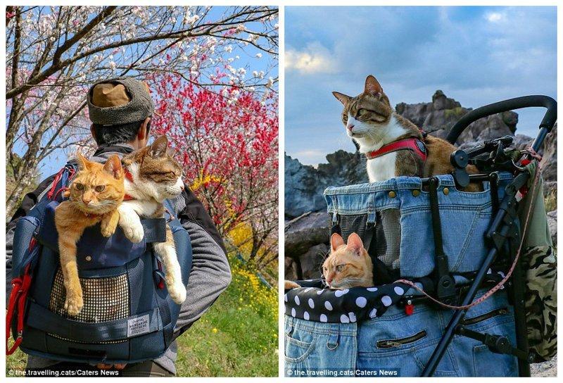 Иногда коты сидят не в тележке, а в рюкзаке. Похоже, им везде хорошо - был бы хозяин рядом домашние животные, животные, инстаграмм, котовасия, кошка, кошки, путешествие, япония