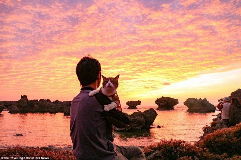 Когда-то Дайкичи был бездомным котенком, а потом у него появился друг домашние животные, животные, инстаграмм, котовасия, кошка, кошки, путешествие, япония