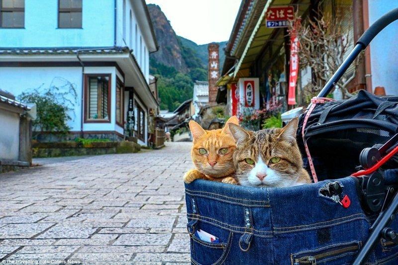 Они посетили уже все 47 префектур Японии, и все перемещения отразили на своей страничке в Инстаграме домашние животные, животные, инстаграмм, котовасия, кошка, кошки, путешествие, япония