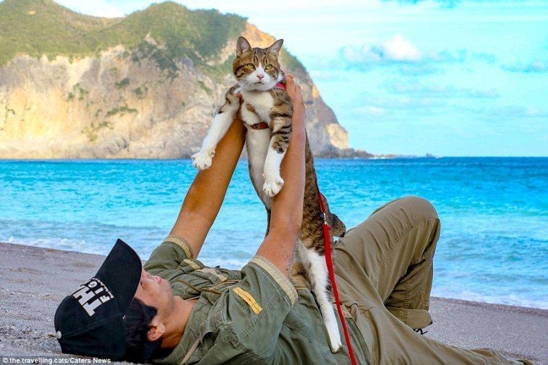 С любимым котом Дайкичи домашние животные, животные, инстаграмм, котовасия, кошка, кошки, путешествие, япония