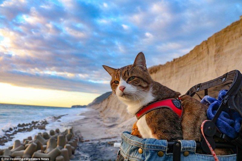 """""""Я начал путешествовать вместе с котами лет семь назад. За это время мы побывали более чем в 1000 районов во всех 47 префектурах Японии"""", - говорит Дайсуке Нагасава домашние животные, животные, инстаграмм, котовасия, кошка, кошки, путешествие, япония"""