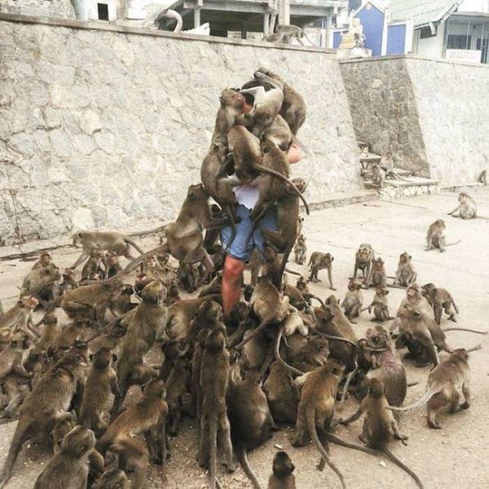 19. Фото с обезьянками! безнадежность, конфуз, невезение, неприятность, плохой день