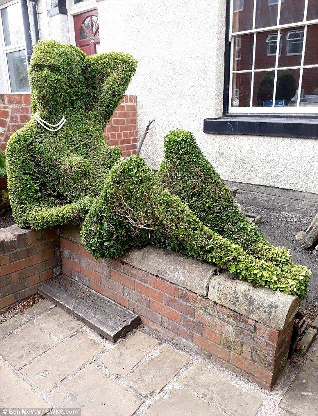 84-летний садовник Кит Тиссен из британского города Шеффилд уже не впервые замечает, что его творение - куст, выстриженный в виде женщины, - привлекает внимание прохожих. Но с таким он не встречался ни разу! абсурд, дерево, забавно, неожиданно, садовник, странные вещи, фото