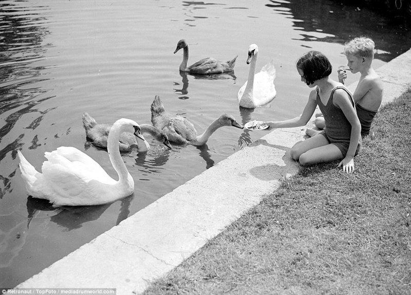 """""""Имперский бассейн"""" (ныне - """"Уэмбли Арена""""), использовавшийся во время Олимпийских игр 1948 года. великобритания, винтаж, история, лондон, люди, ретро, ретро фото, старые фотографии"""