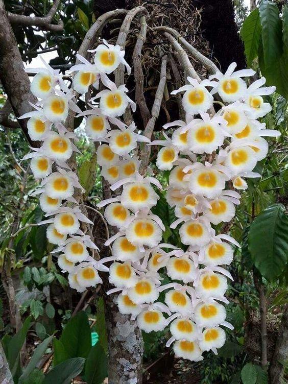 Великолепие живых гирлянд гирлянды, интересное, красота, природа, фотомир, цветы