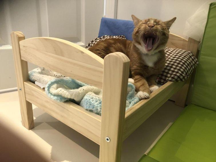 Как насчёт собственной кровати? домашний питомец, животные, жизнь, кот, прикол