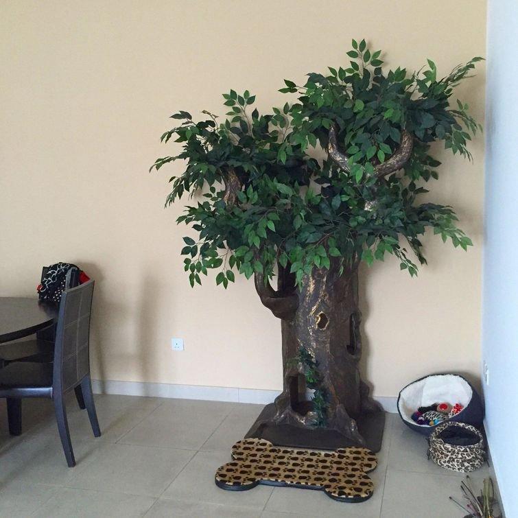 """""""Моя мама целый год копила деньги, чтобы купить кошкам это дерево"""" домашний питомец, животные, жизнь, кот, прикол"""