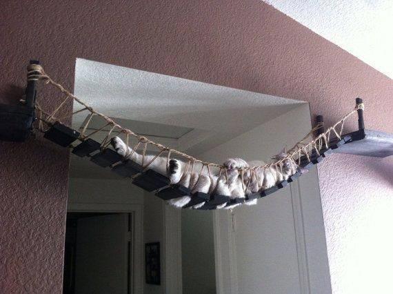 Или кошачьего гамака? домашний питомец, животные, жизнь, кот, прикол