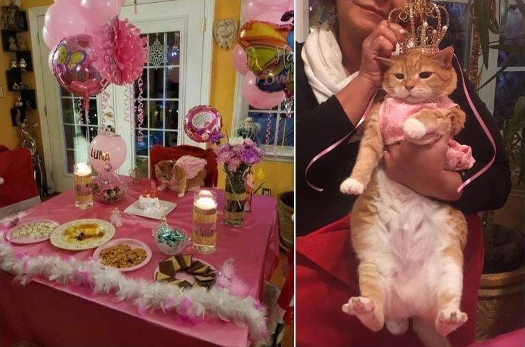 """""""Моя семья устроила кинсеаньеру кошке, которой исполнилось 15"""" домашний питомец, животные, жизнь, кот, прикол"""