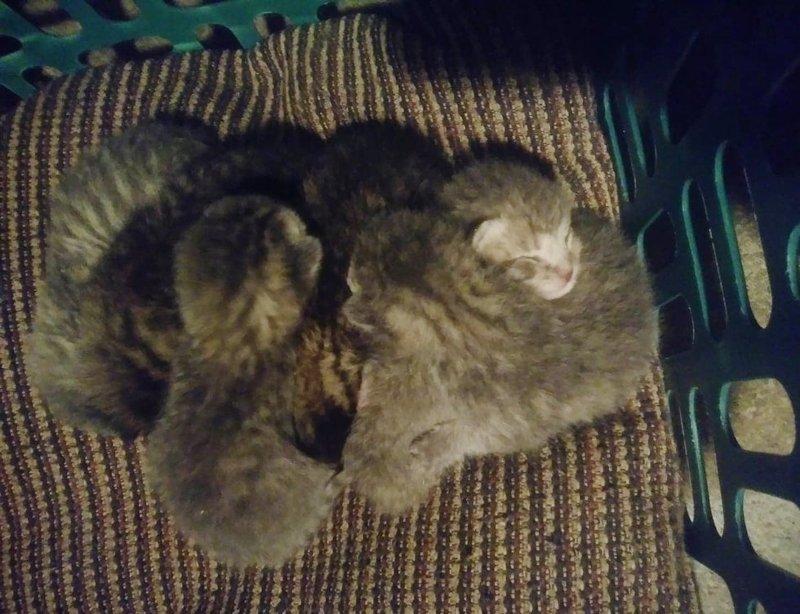 Ночью семья проснулась от кошачьего хора в комнате. Но… у них не было котов! животные, история, спасение