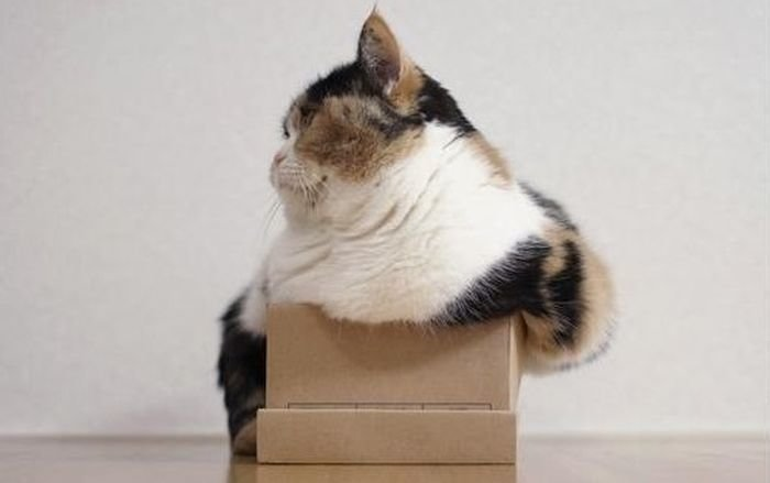 8. Коты и их любовь к коробкам и пакетам Любовь, животные, котизм, котики, коты